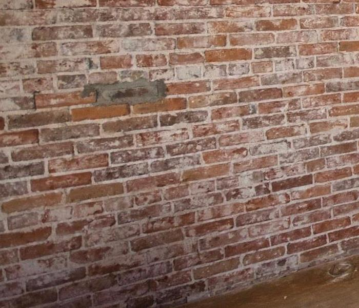 Removing mold from brick After