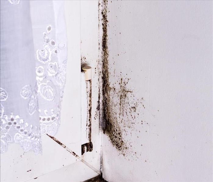 Why SERVPRO Ugly Mold Patches in Your San Francisco Home!!  A Good Reason to Call SERVPRO
