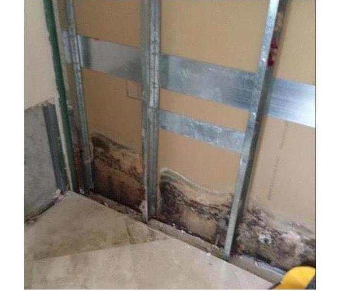 Mold Remediation Food for Mold