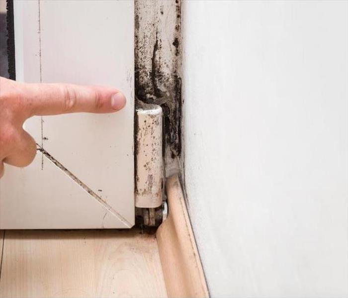 Mold Remediation Do You Struggle with Finding the Source of the Musty Smell of Mold in Your San Francisco Home?